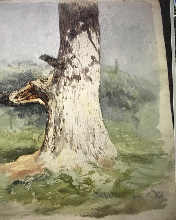 sketch of tree 1846 june.jpg