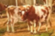 NUMBER 677 Odhams Barn detail I1).jpeg