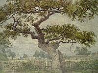Ancient Oak.png