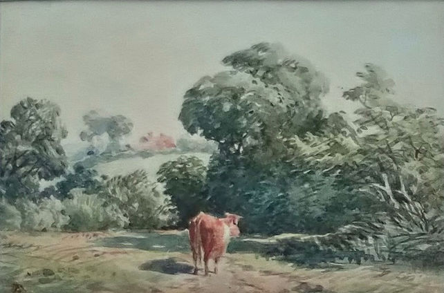 Cow in a rural scene.jpg