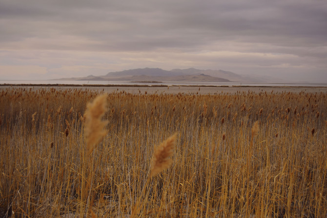 Antelope Island & The Great Salt Lake