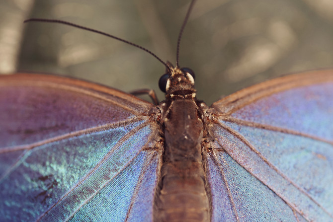 Lepidoptera & others - Museum of Natural History, Gainesville FL