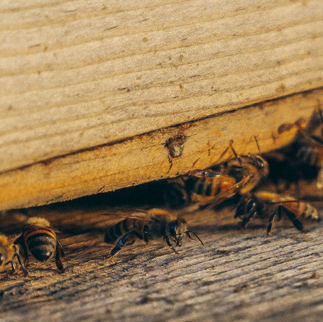 Six Items That Are Attracting Pests to Your Home
