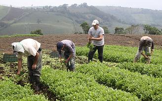 agriculturaenseñar.jpg