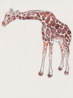 2019.W.Giraffe461.JPG
