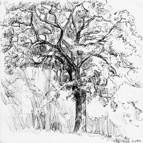 Patapsco Tree