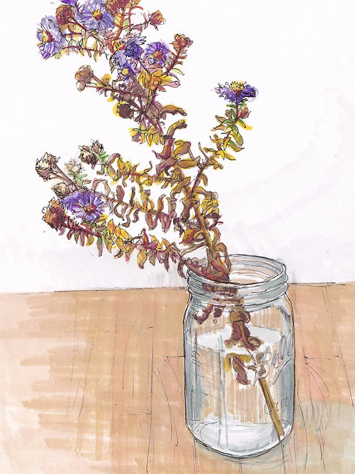 Asters in Jar