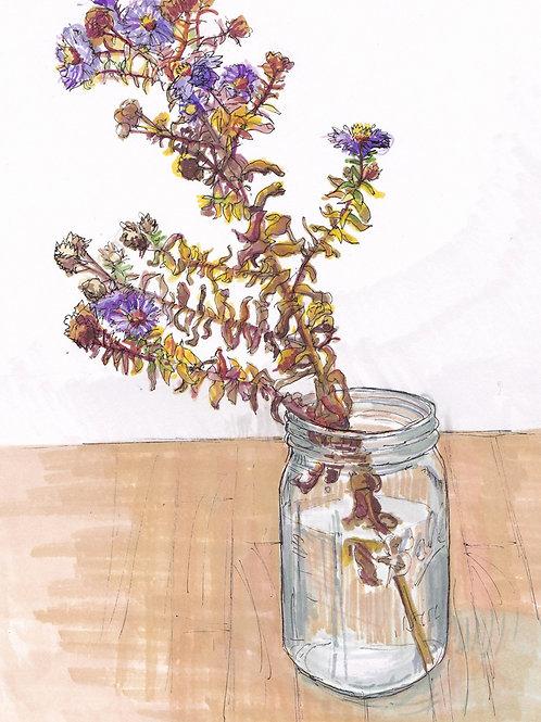 Asters in Jar