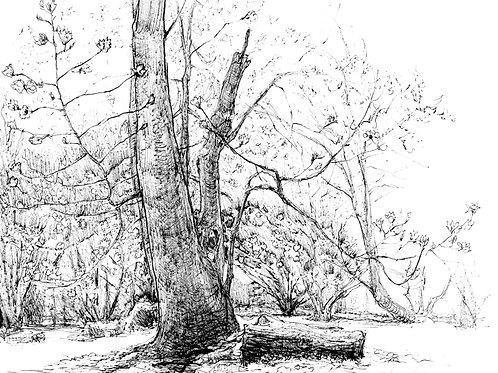 Cylburn Magnolia