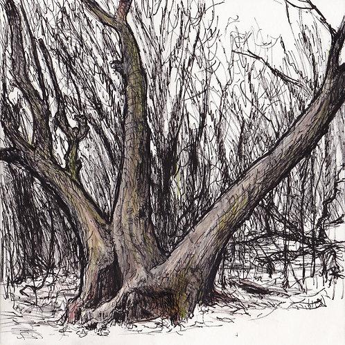 Minnesota Valley Tree