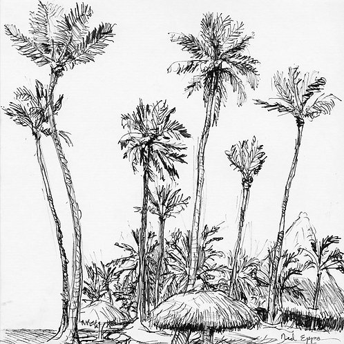 Dominican Palms