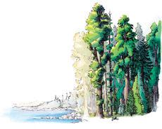 2015.I.Redwoods409.JPG
