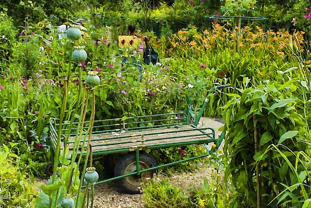 Permaculture gardens and aesthetics