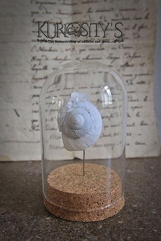 Coquille d'escargot avec cristal sous globe de verre