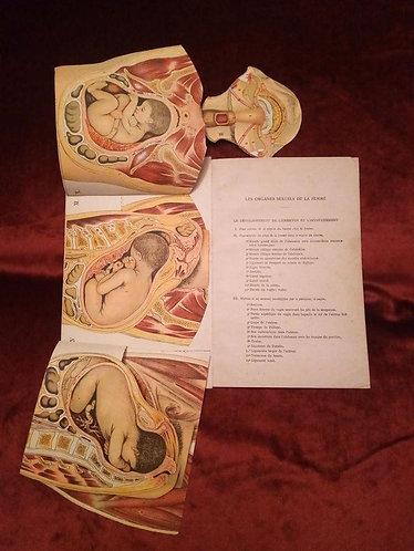 Planches anatomiques de la femme
