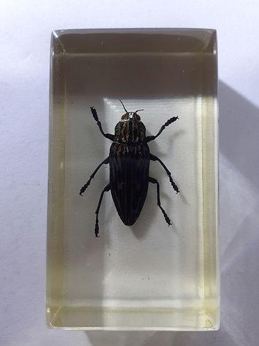 Insecte sous resine #2