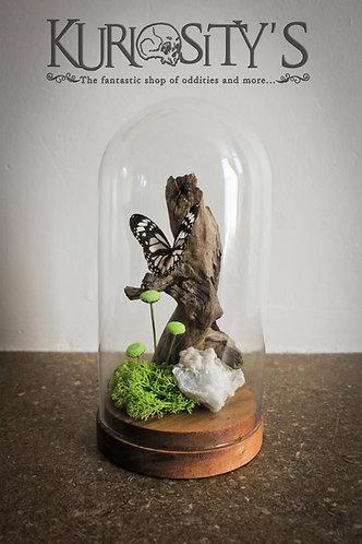 Composition Papillon sur Branche sous globle de verre*******