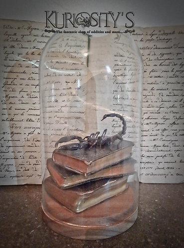 Scorpion sous globe en verre