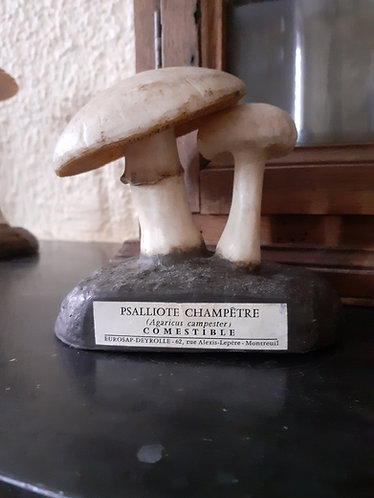 Modèle champignon Psalliote Champetre -Deyrolle