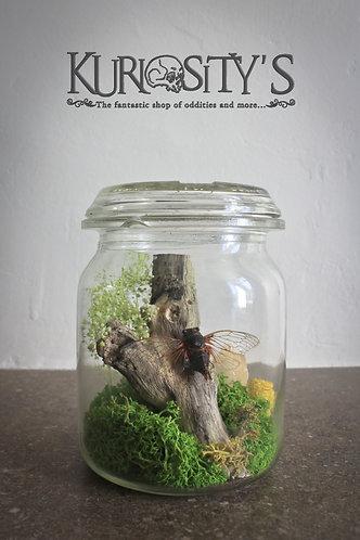 Composition cigale dans pot en verre vintage
