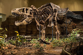 Carnegie Museum of Natural History Dinos