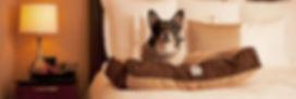 Hyatt Place Meadows Casino-Dog-Laying-on