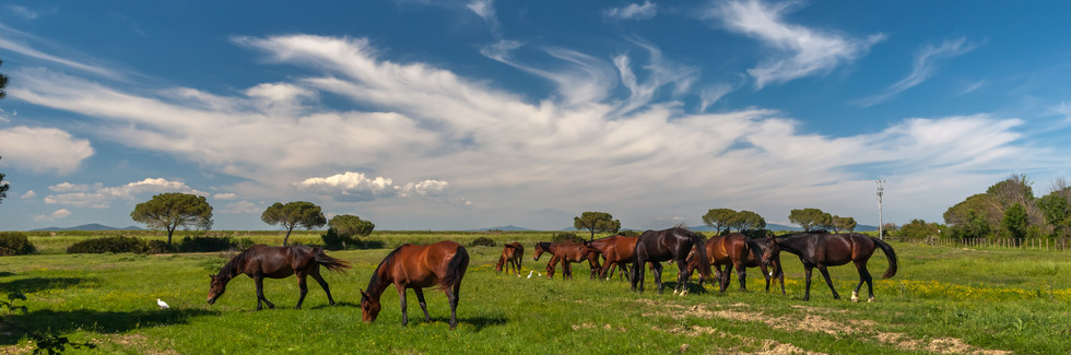 panorama-with-horses-grazing-on-green-me