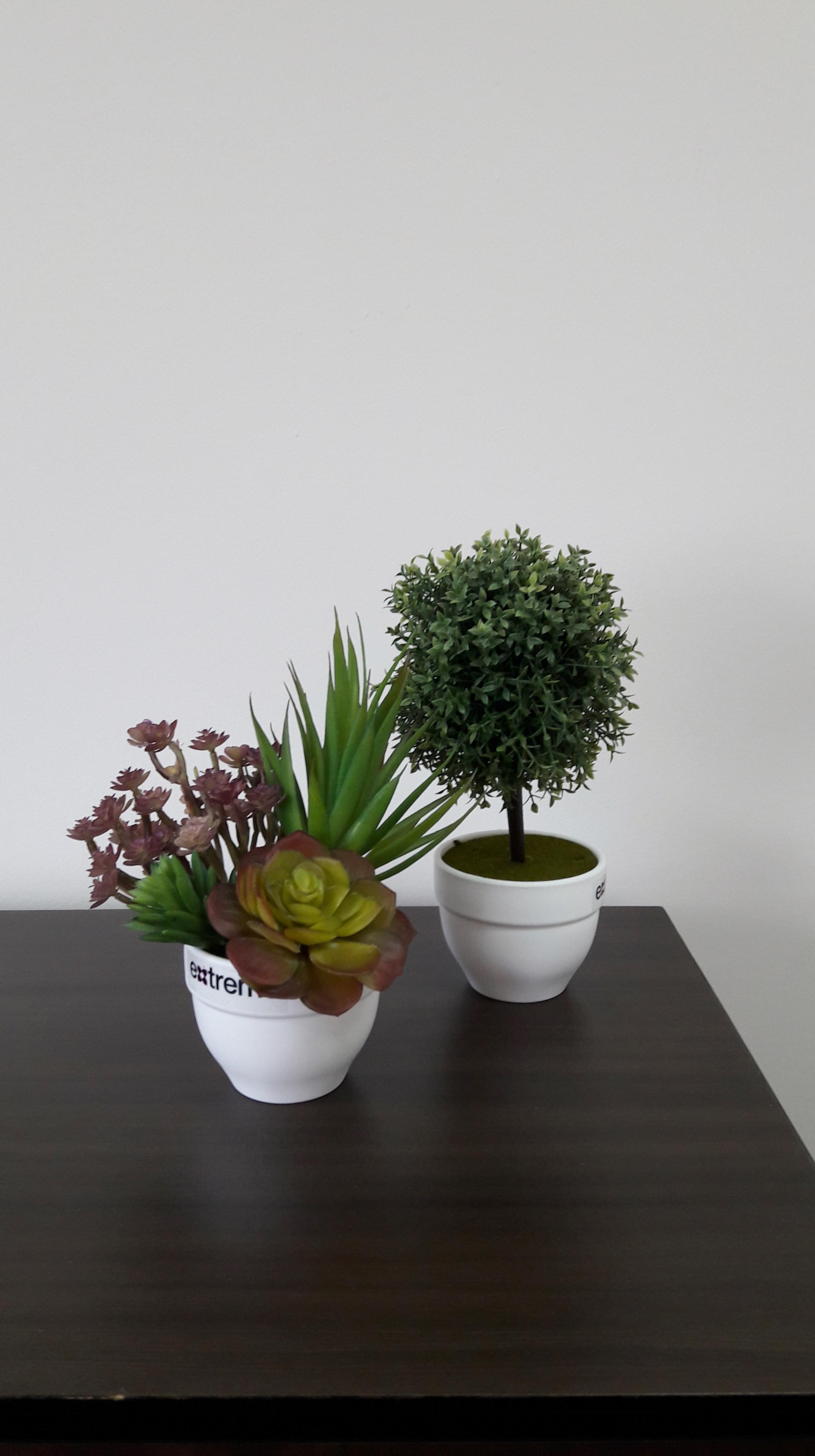 צמחיה על השולחן