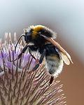 Wildbienen-Nisthilfe Biene Blume Blüte