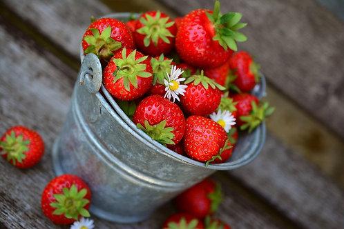 "Erdbeere ""Senga Sengana"""