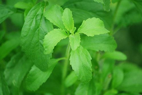 Stevia Bio - Süßkraut