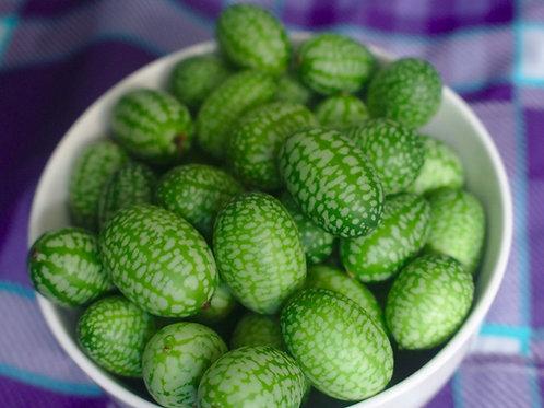 Mexikanische Mini-Gurke