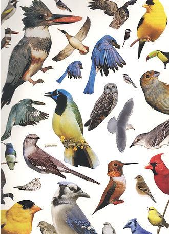 Bird Collage.jpg