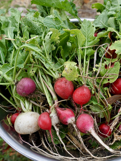 Produce from the kitchen garden