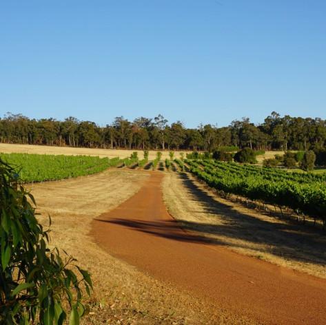 Hainault estate vineyard