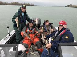Detroit River Walleye