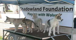 Puppies Honor and Honored by SYSW.