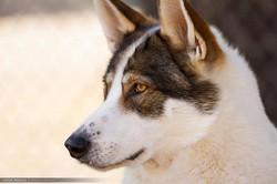 Kachina (Navajo for Spirit)