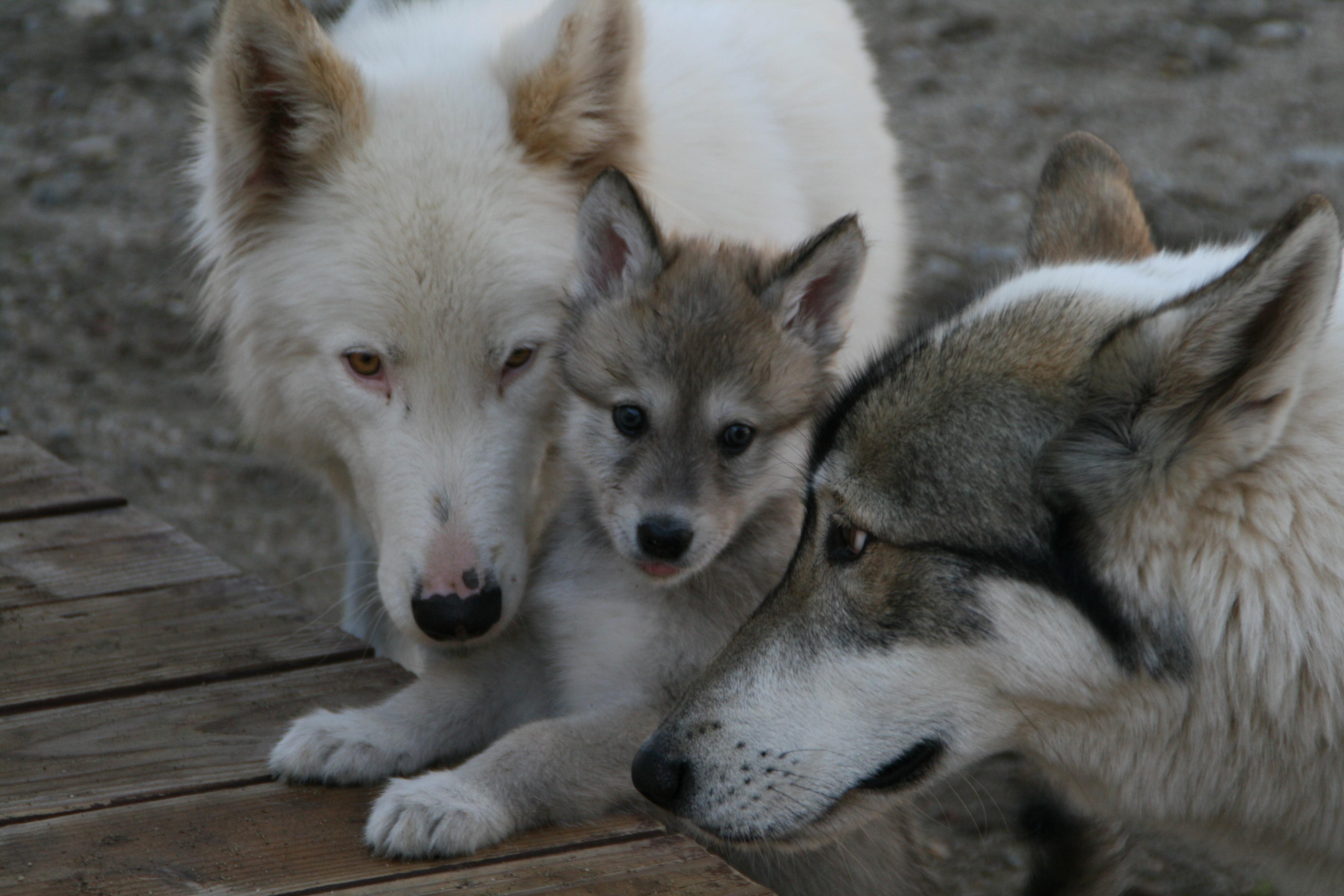 Puppy sitters