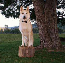 Wolfsman, Takoda