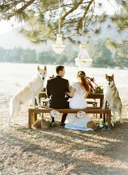 Wolf Wedding