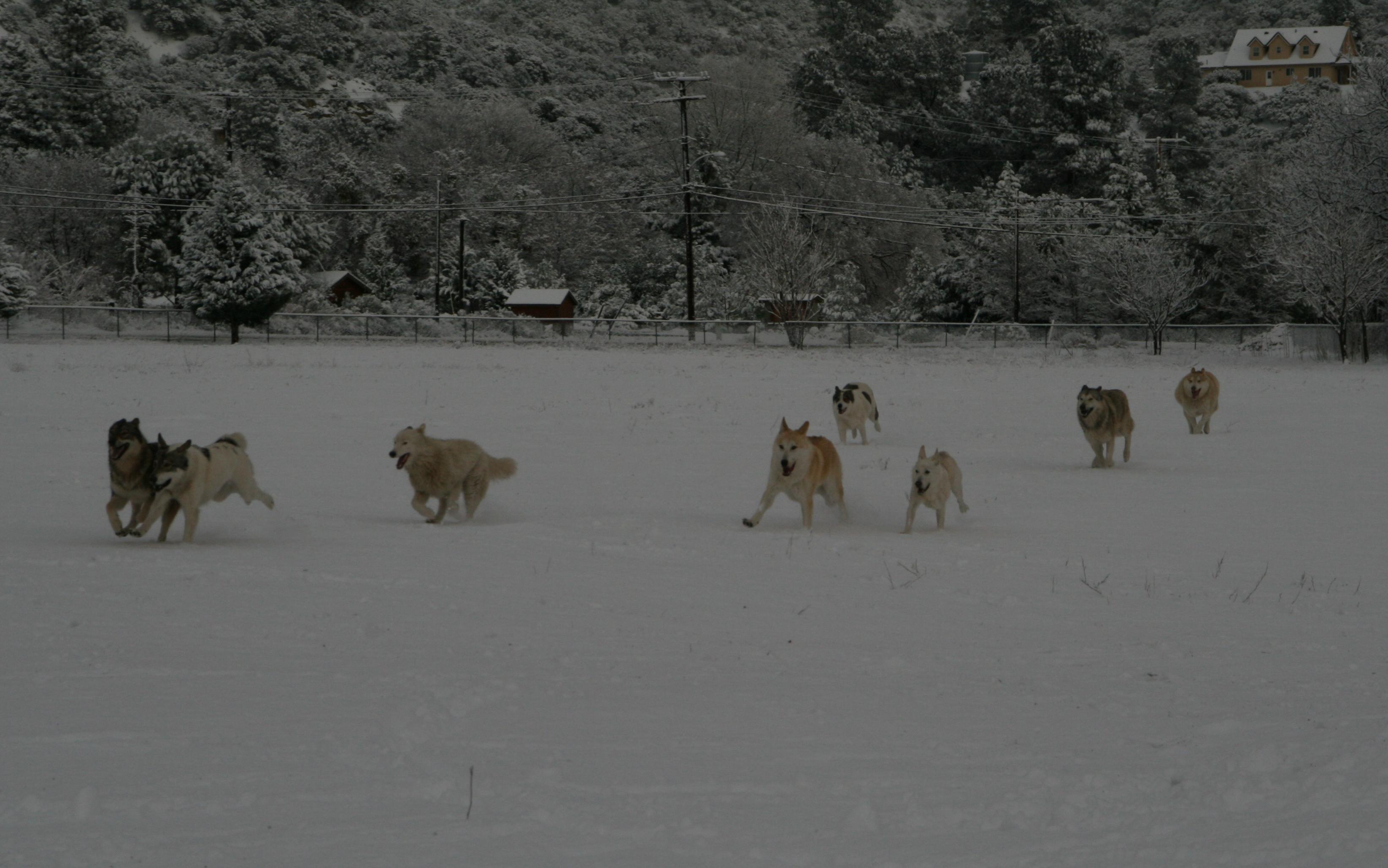 Shadowland Wolfpack