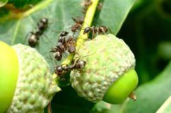 Ameisen ganz nah