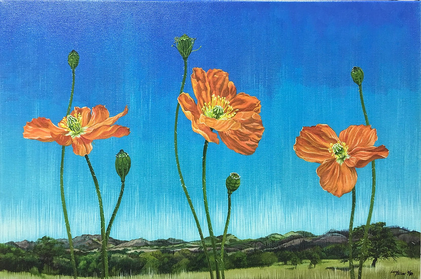 Giclée canvas print depicting several California poppies and buds in front of a Sonoma county landscape
