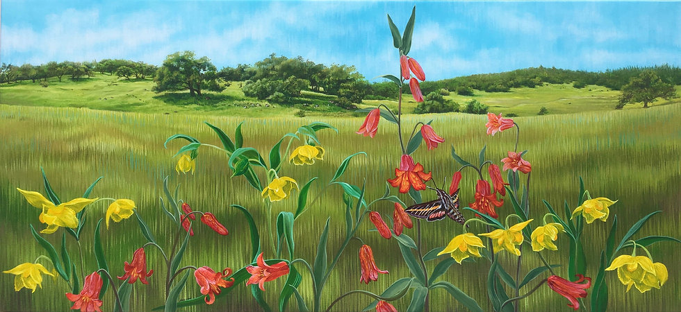 Giclée canvas print of scarlet fritillarie and golden fairy lantern flowers in front of a Sonoma county landscape