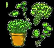 color-sketch-watercress-salad-plant-herb