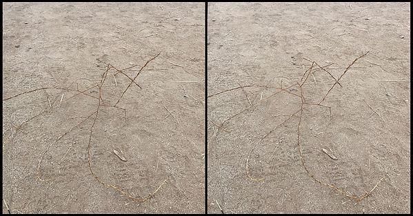 twig constellation_nsa1.jpg