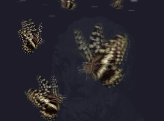 Papilio Demodocusis