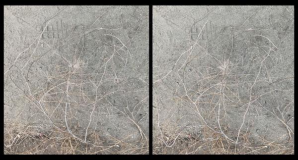 twig constellation_nsa 5.jpg