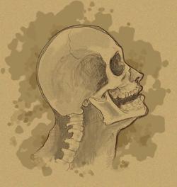 head side skull